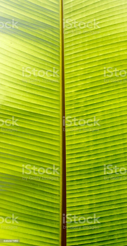 Pattern Leaf Banana stock photo