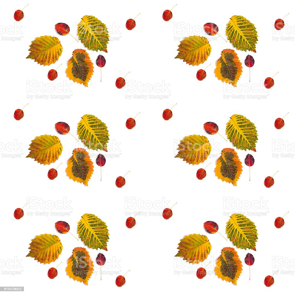 pattern multicolored autumn leaves stock photo