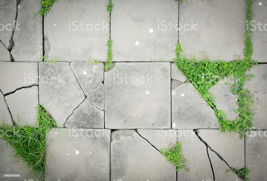Pattern of cracked paving blocks floor with weed. stock photo
