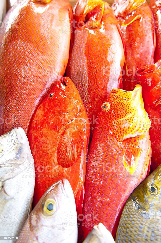 pattern of fish royalty-free stock photo