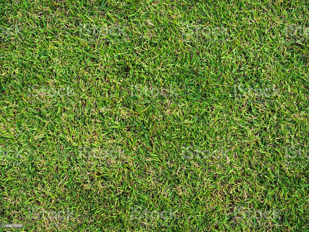 Pattern Of grass stock photo