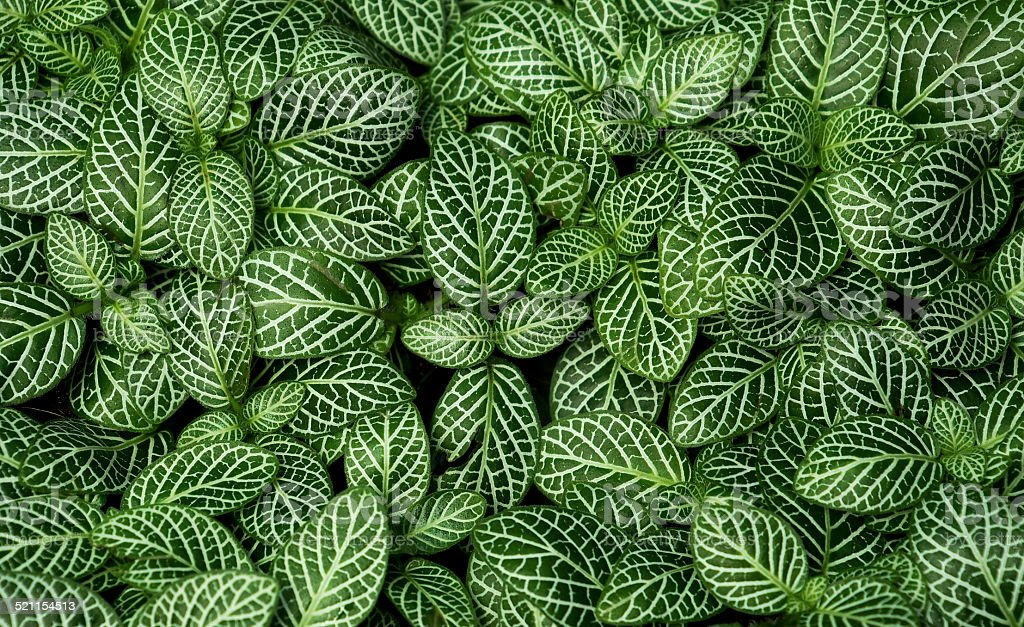 pattern of the nature stock photo