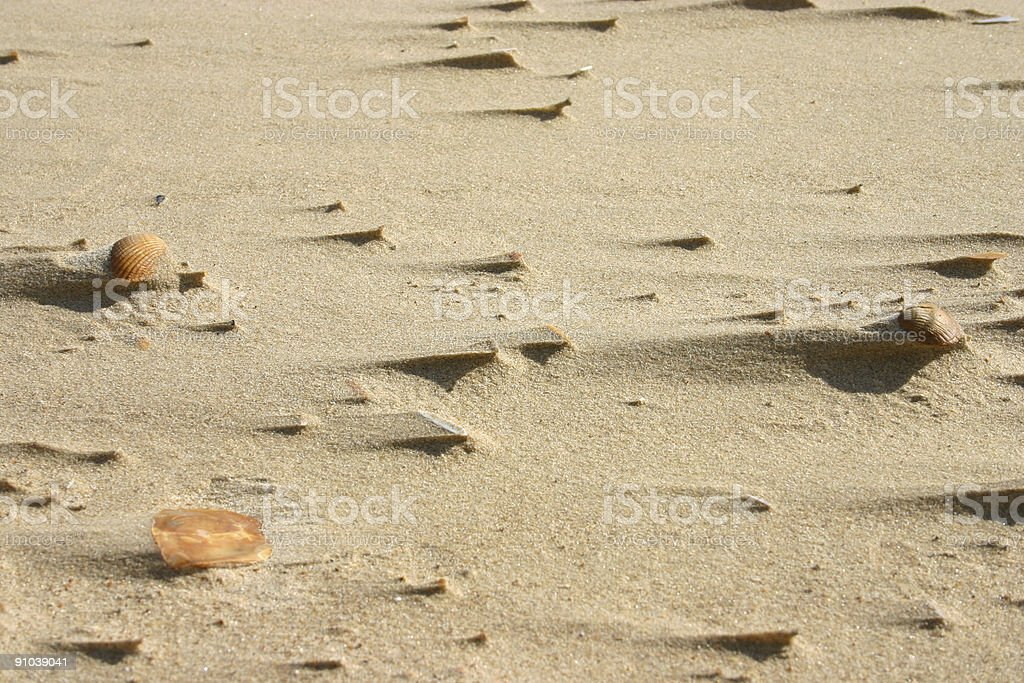 pattern of wind-exposed beach elements stock photo