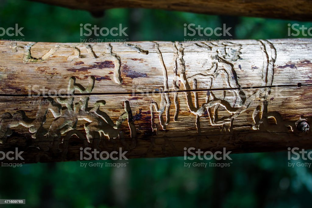 Pattern on woodwork created by woodworms royalty-free stock photo