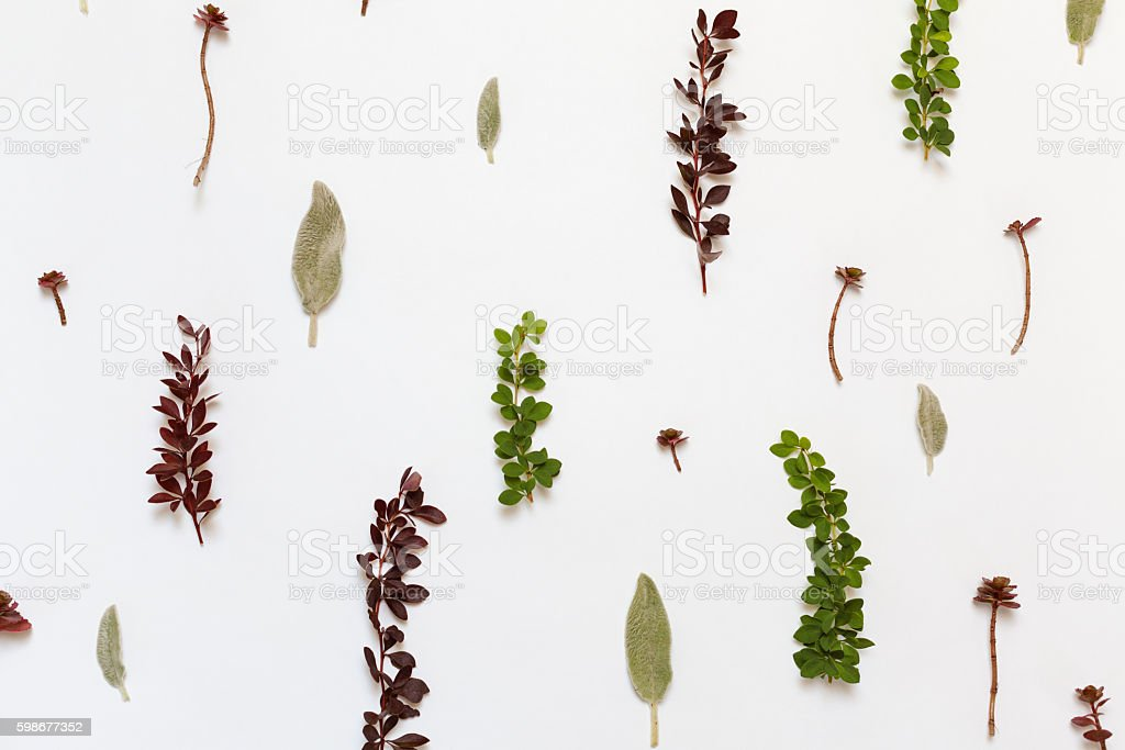 Pattern with Berberis, Stachys byzantina leaves and Stonecrop stock photo