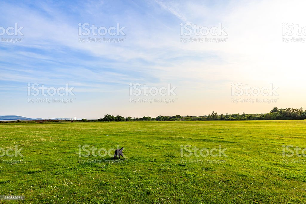 Patterndale Terrier running in large field stock photo