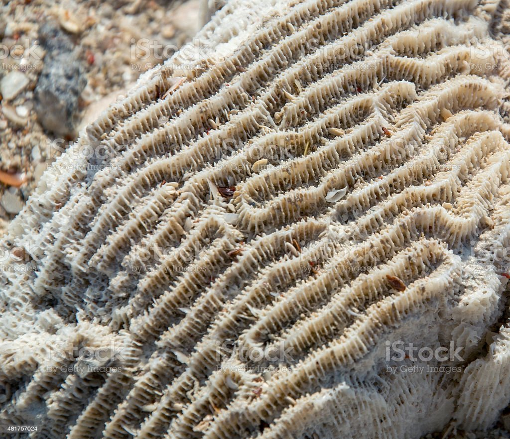 patterns of coral stock photo