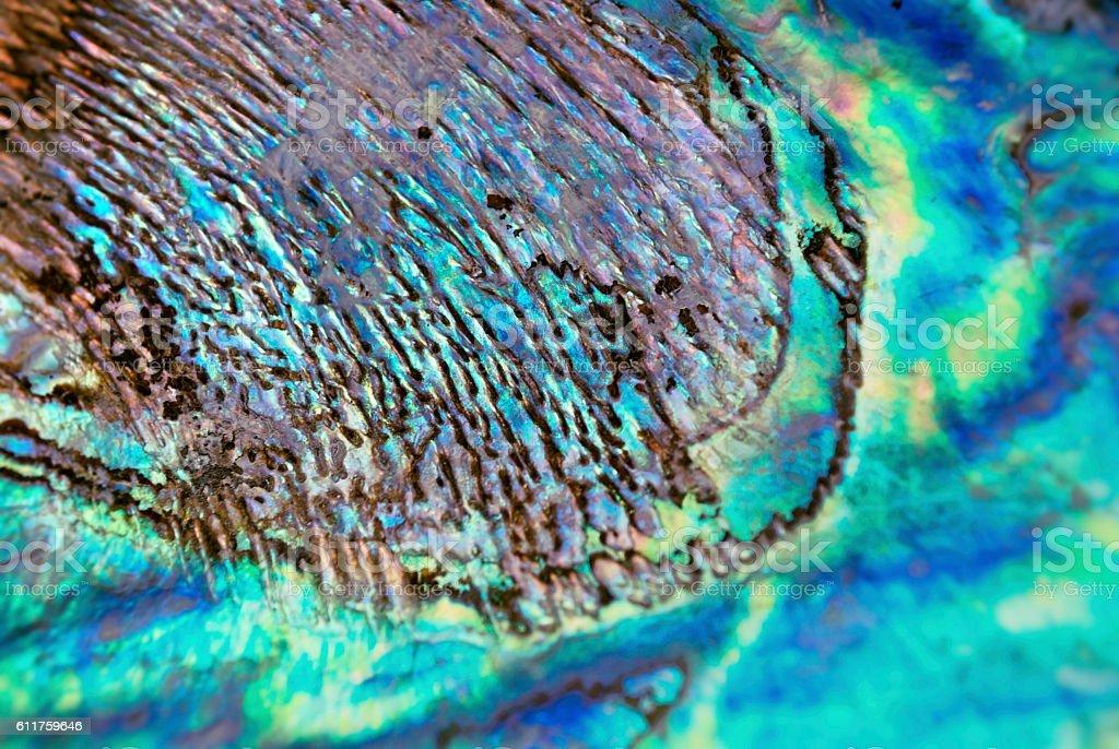 Paua Shell (New Zealand Abalone) stock photo