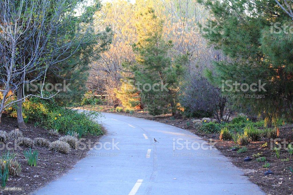 Paved Path Through Trees royalty-free stock photo