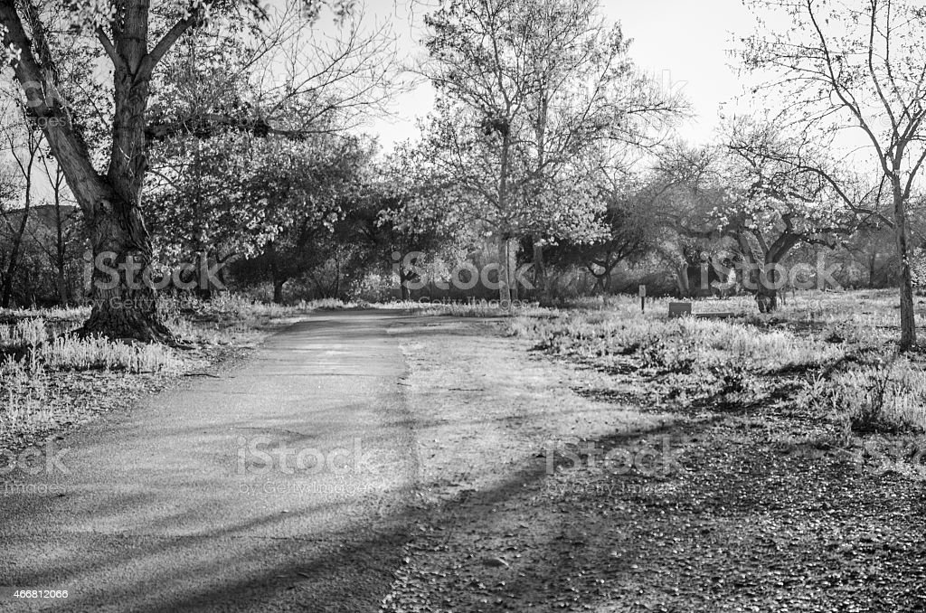 Paved Trail with Sunlight Passing through Trees, Black and White stock photo
