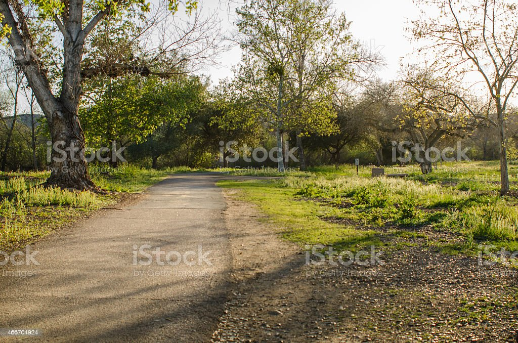 Paved Trail with Sunlight Passing through Trees stock photo