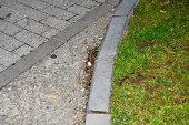 Pavement and grass
