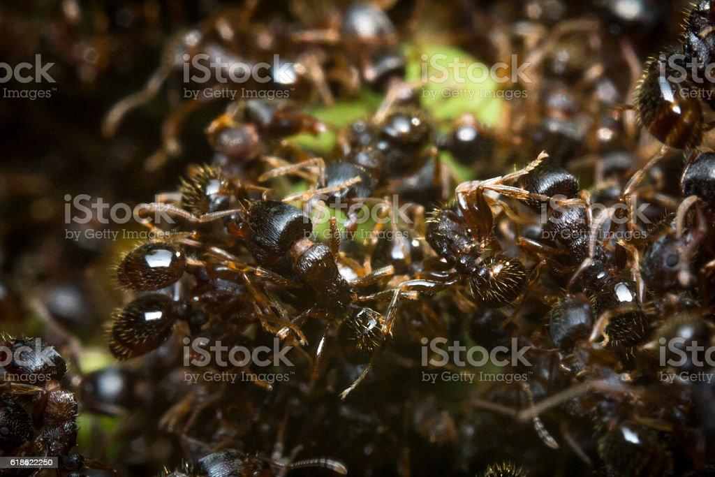 Pavement Ant Hill stock photo