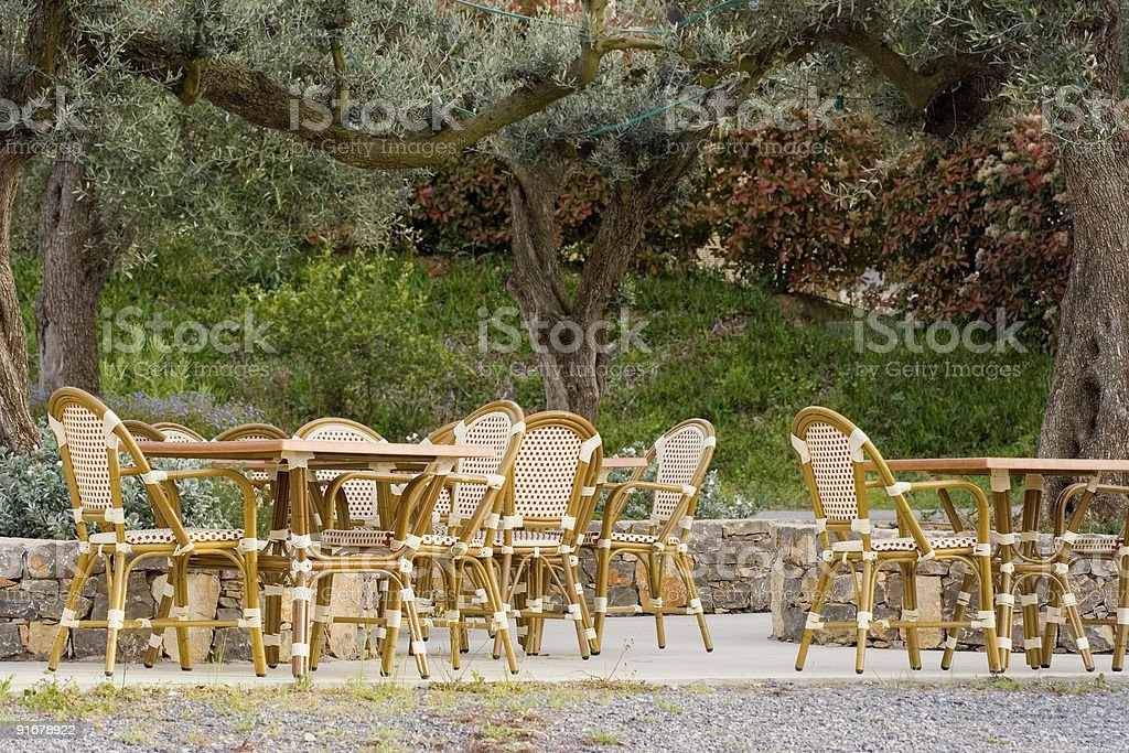 pavement cafe under an old olive tree royalty-free stock photo