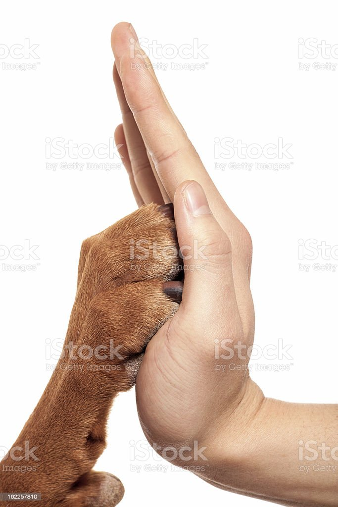 paw and hand stock photo