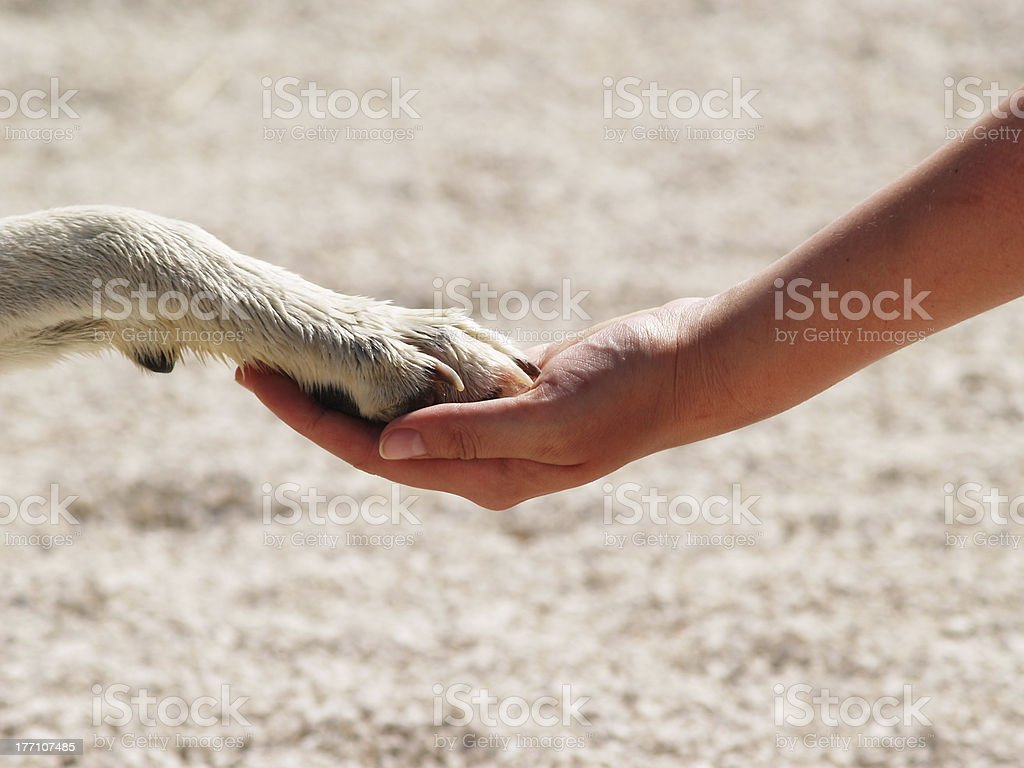 Paw in hand royalty-free stock photo