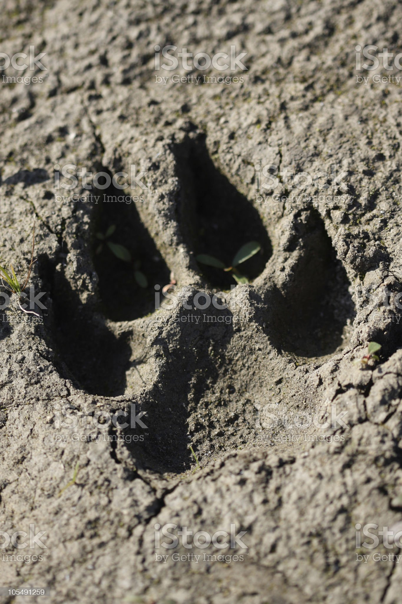 Paw in the Mud royalty-free stock photo
