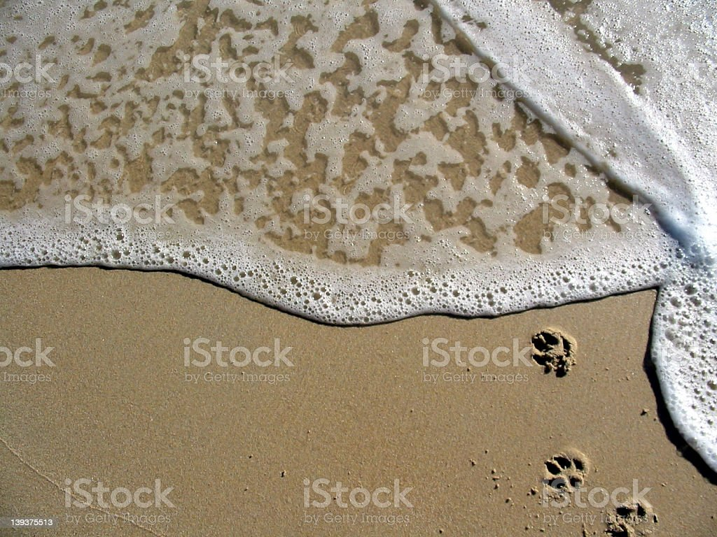 Paw Ocean royalty-free stock photo