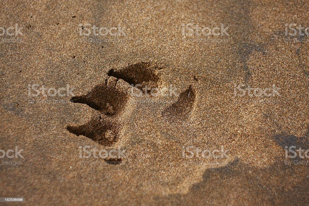 Paw Print in Sand royalty-free stock photo