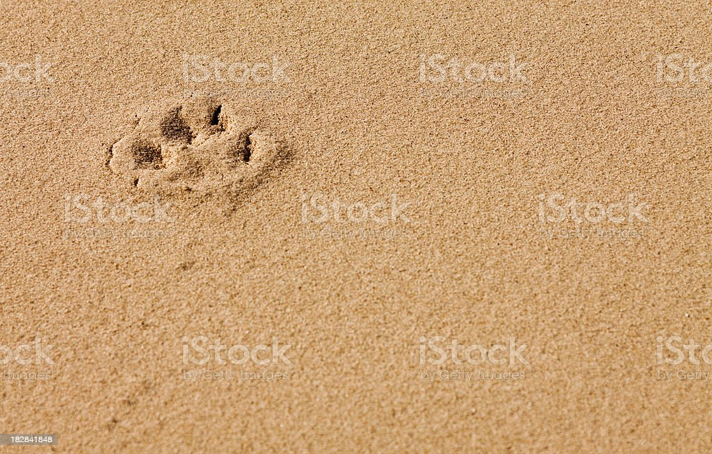 Paw Print royalty-free stock photo