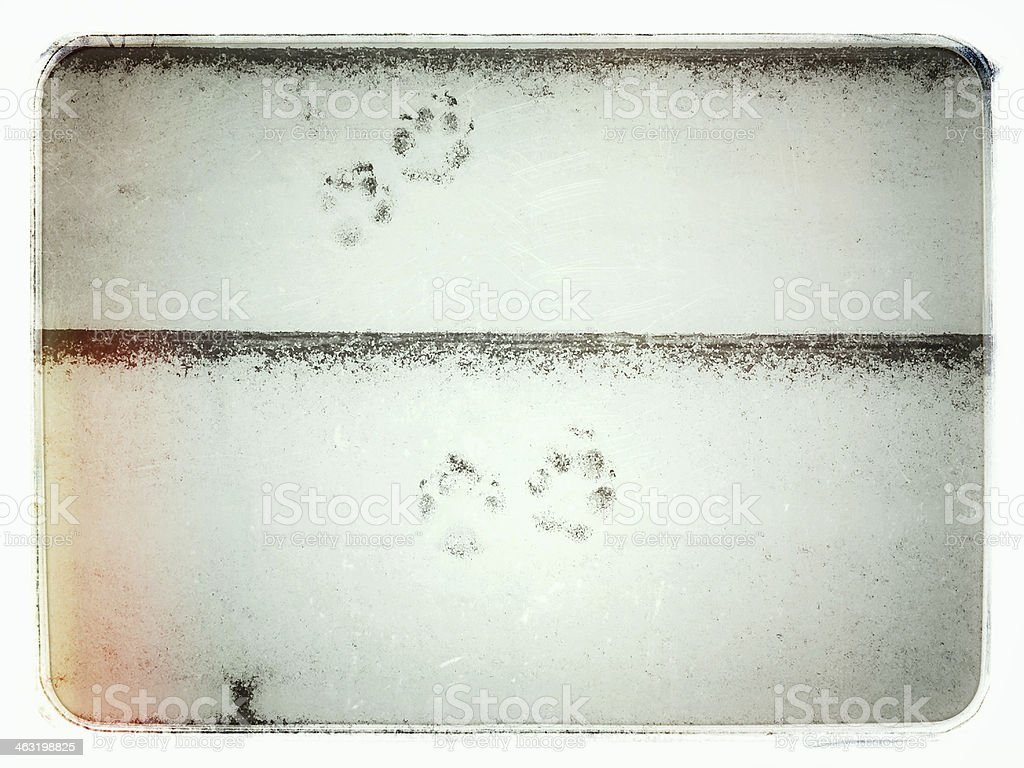 Paw Prints in Snow royalty-free stock photo