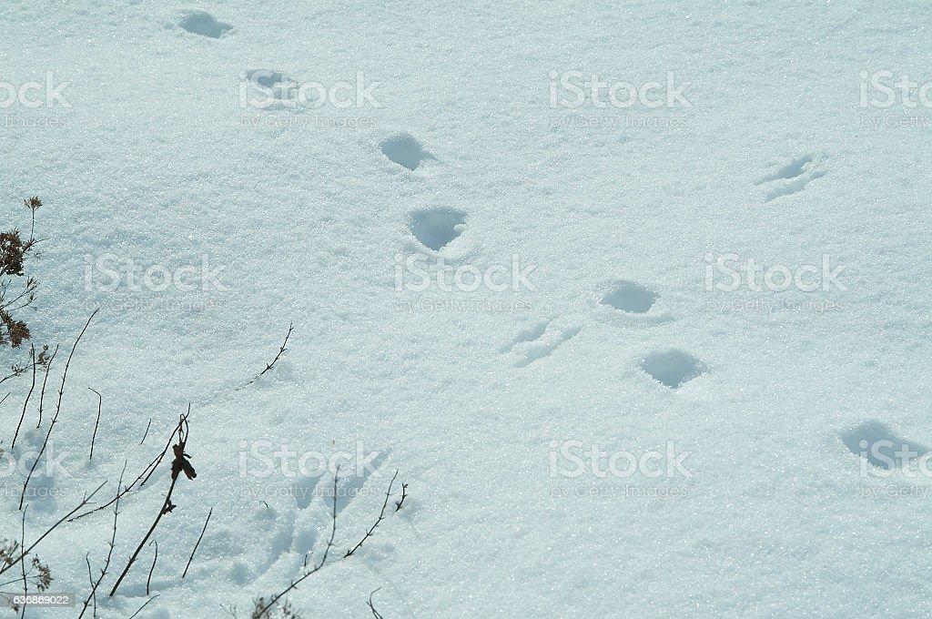 Paw prints in snow stock photo