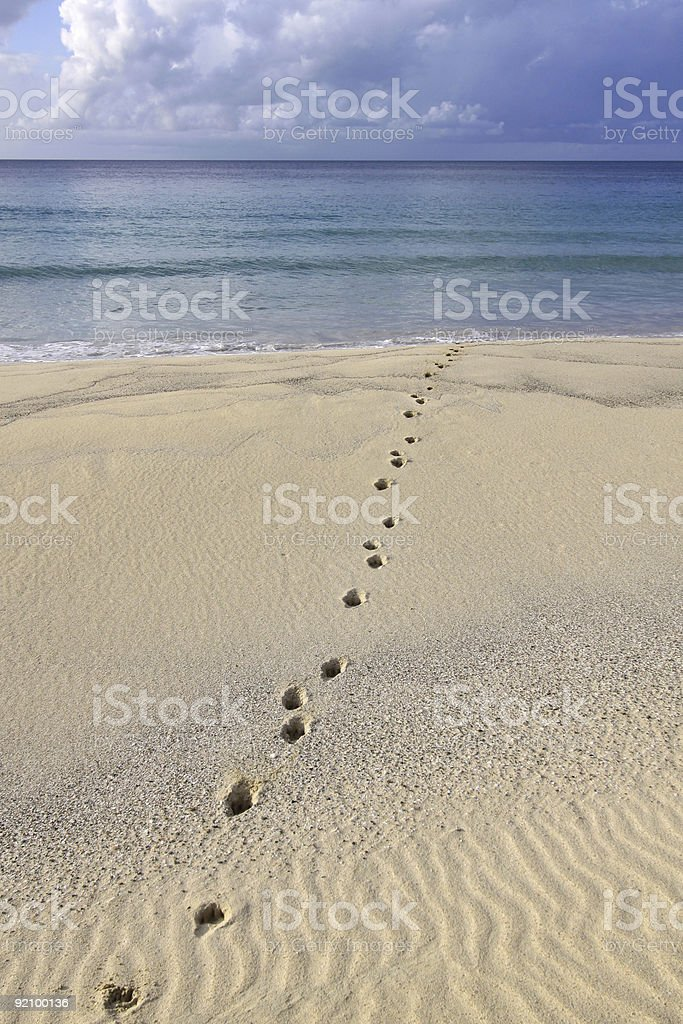 Paw Prints in the Sand royalty-free stock photo