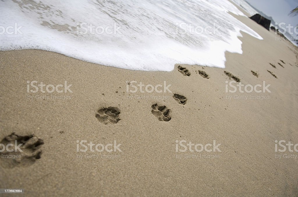 Paw prints of a dog on the beach stock photo