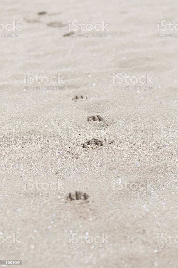 paw prints royalty-free stock photo