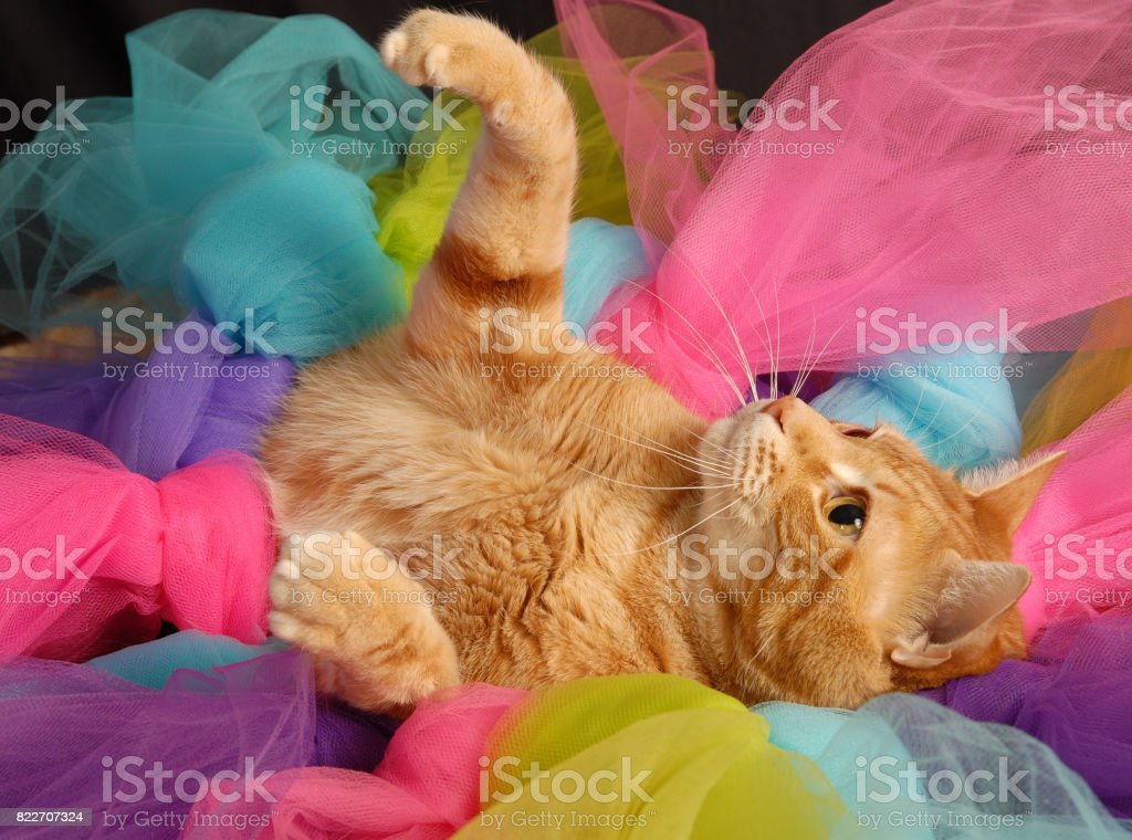 Paw Up stock photo