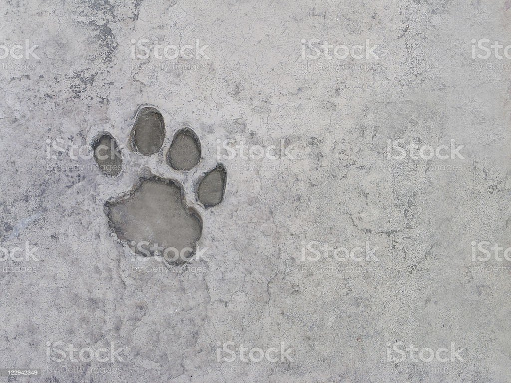 Pawprint in Concrete stock photo