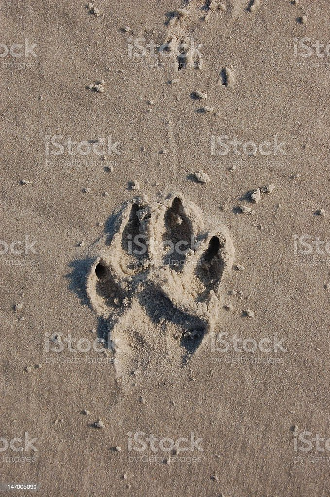 pawprint in the sand royalty-free stock photo
