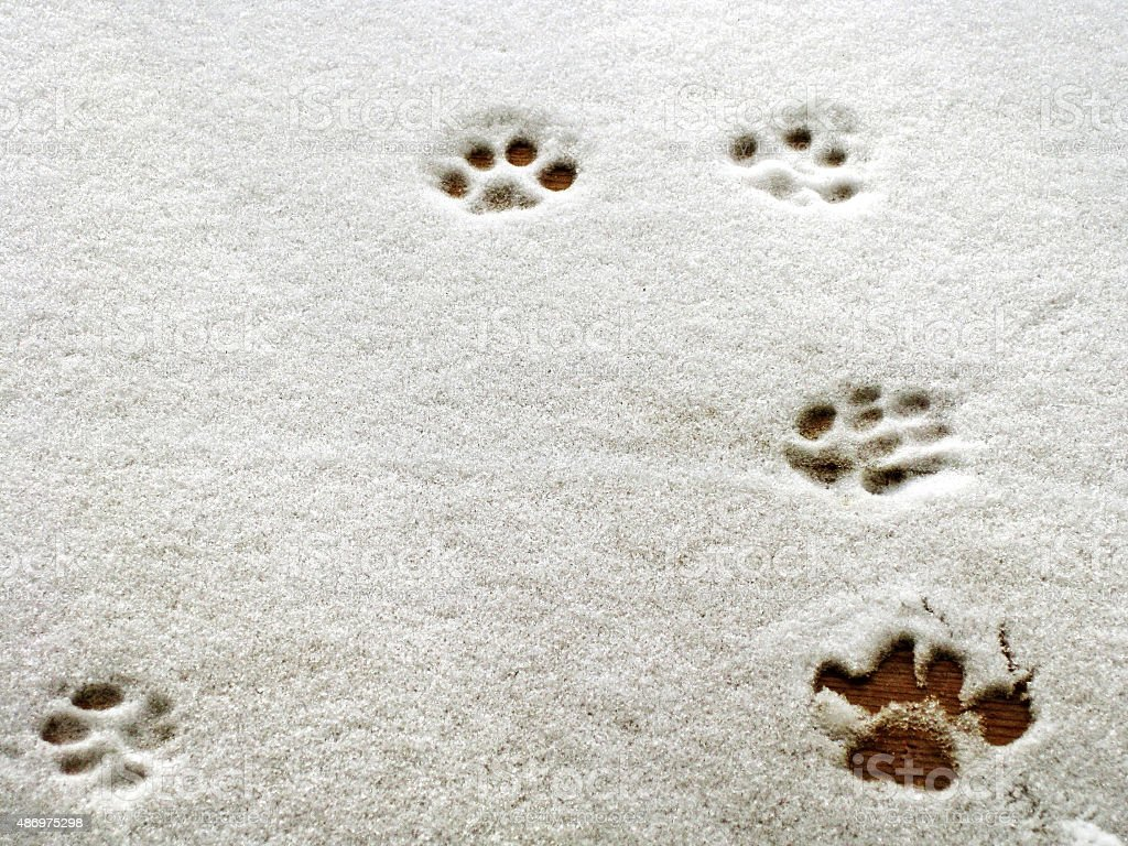Pawprints in Snow stock photo