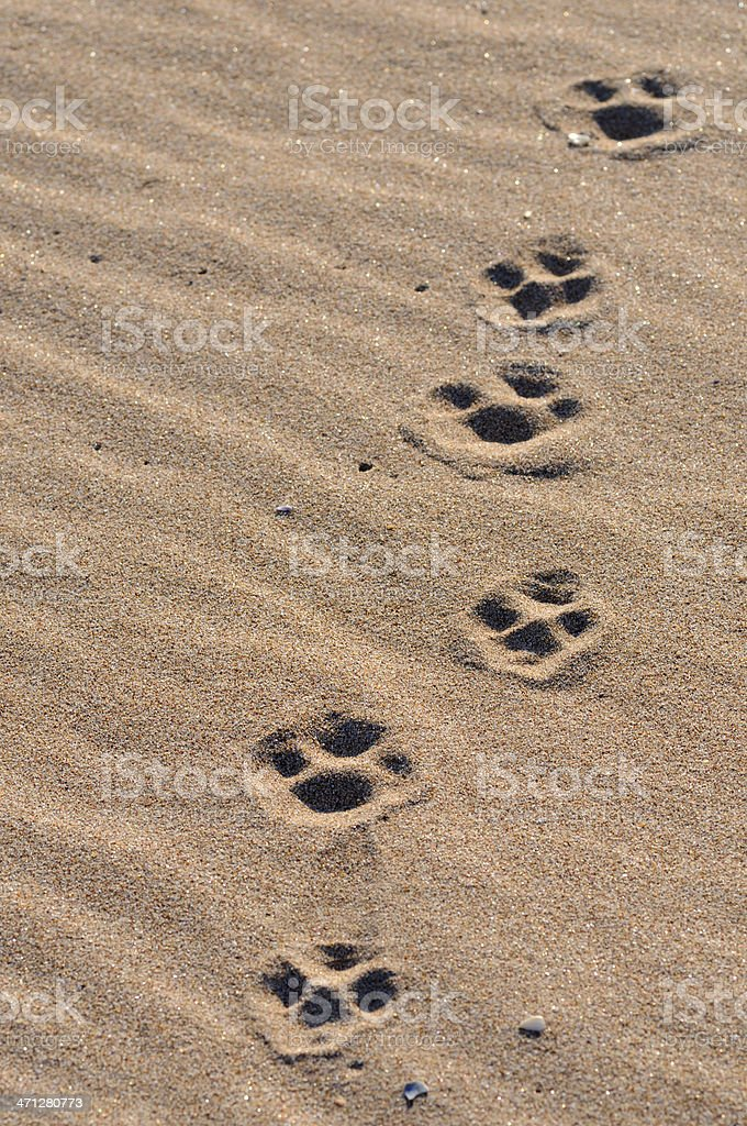 Pawprints royalty-free stock photo