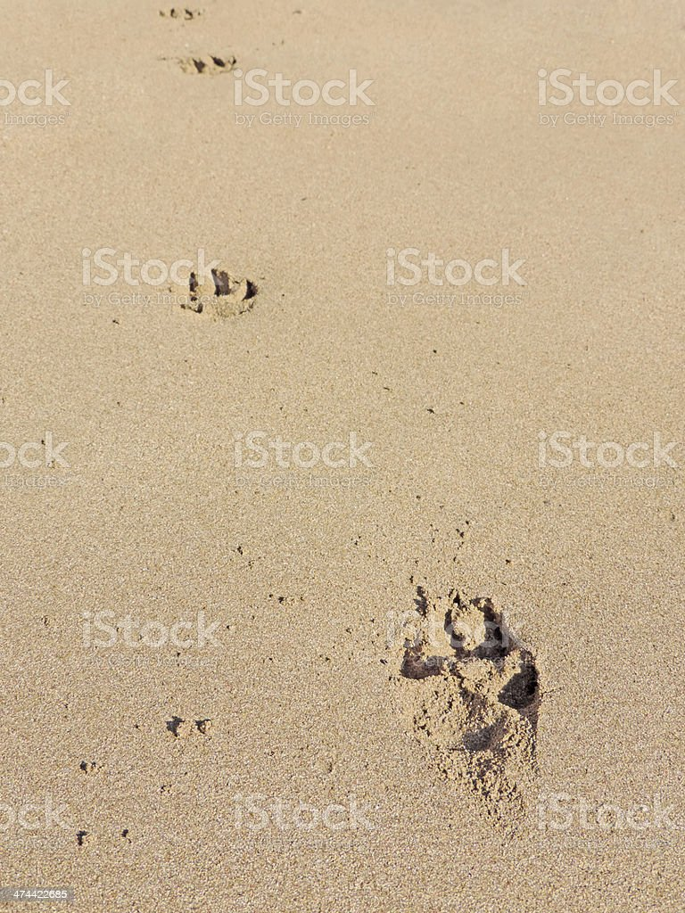 Pawprints stock photo