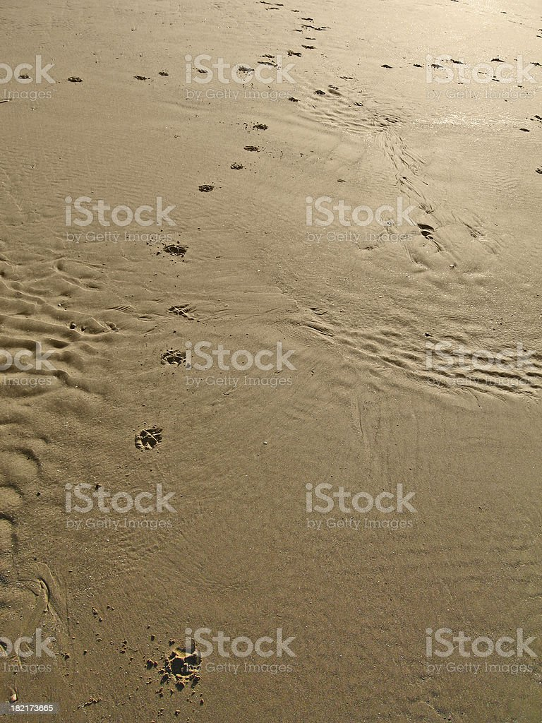 Paws in the sand royalty-free stock photo