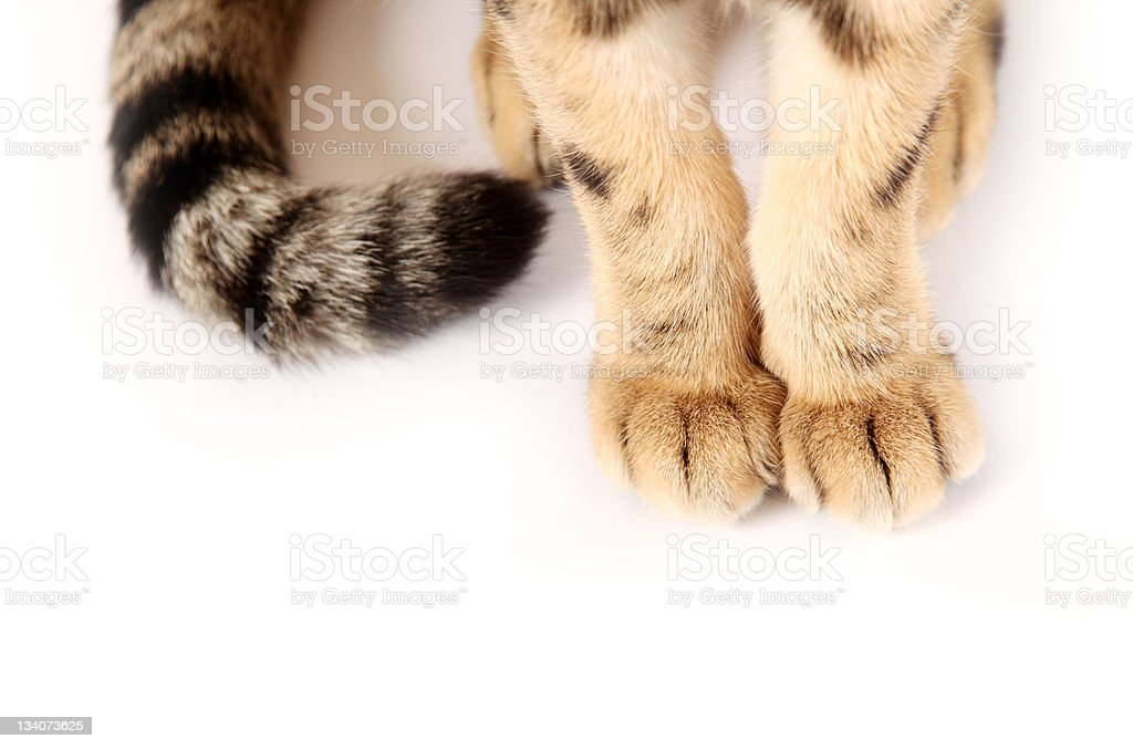 Paws stock photo