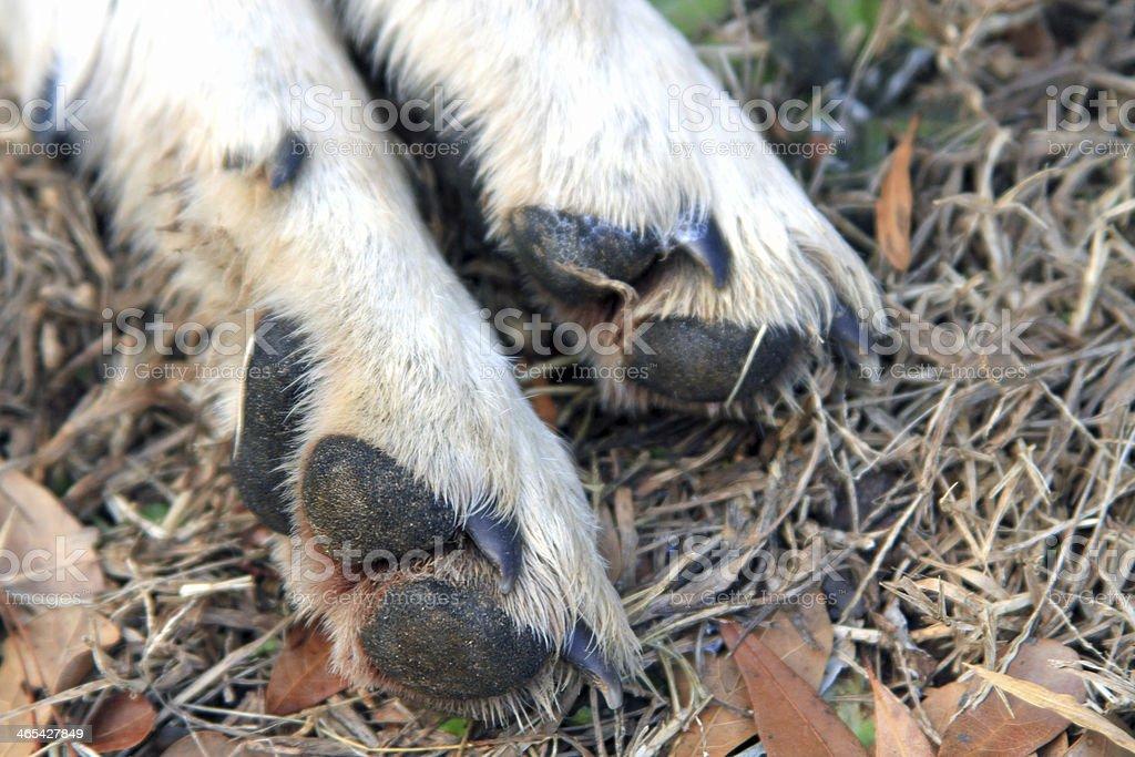 Paws stock photo
