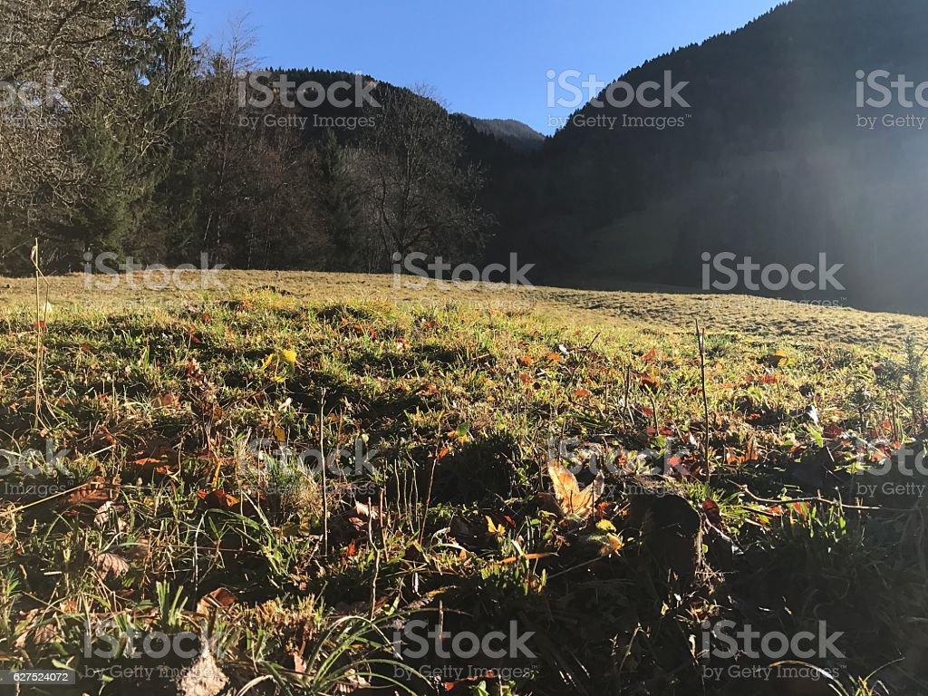 Paysage automne d'herbe et des arbres stock photo