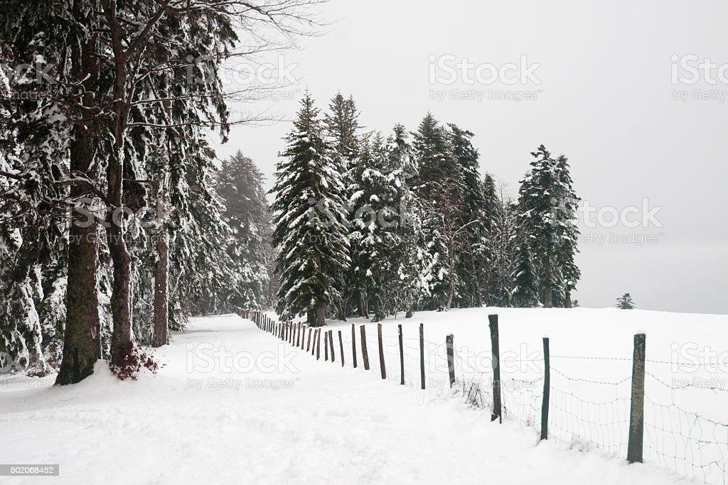 Paysage sous la neige stock photo