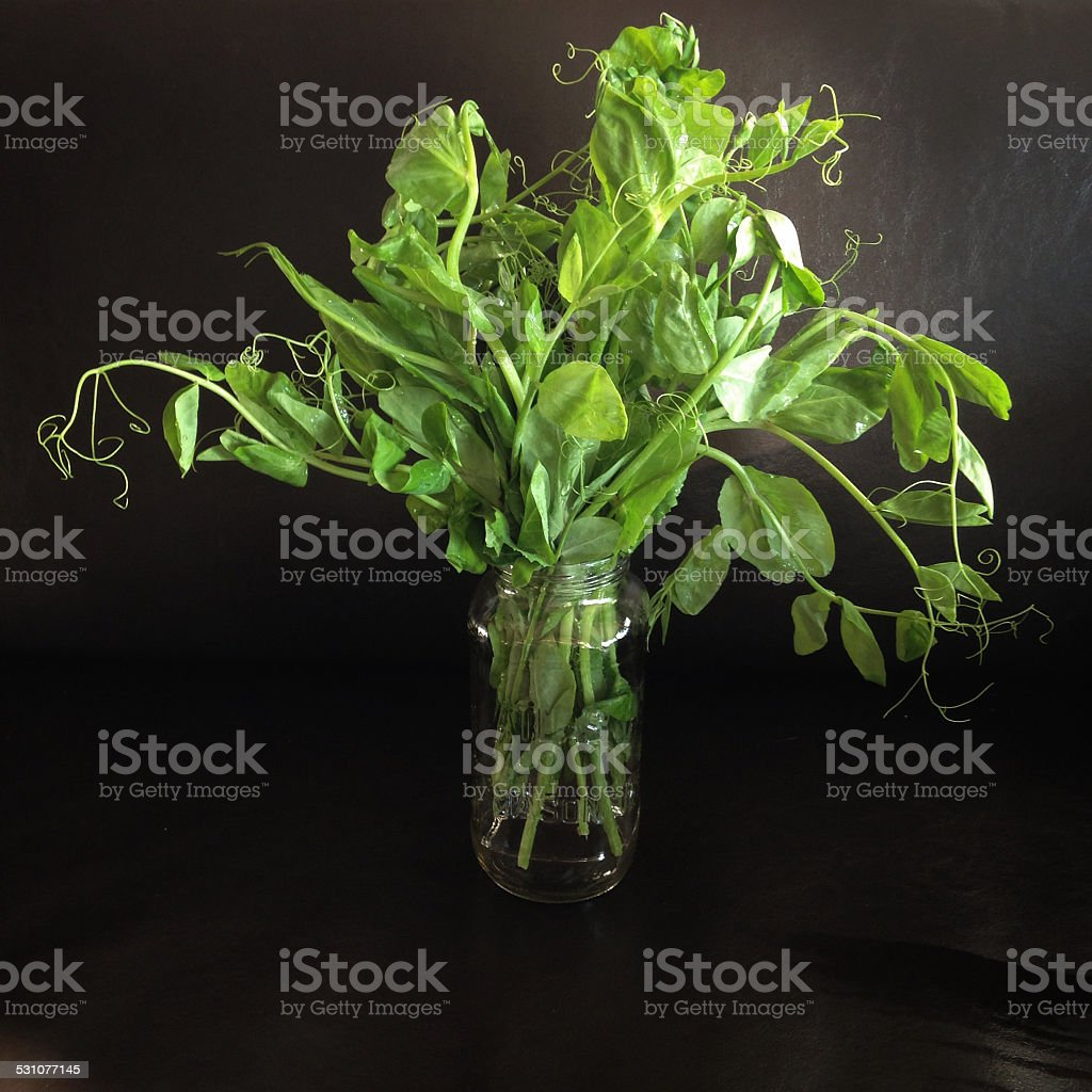 Pea shoots stock photo