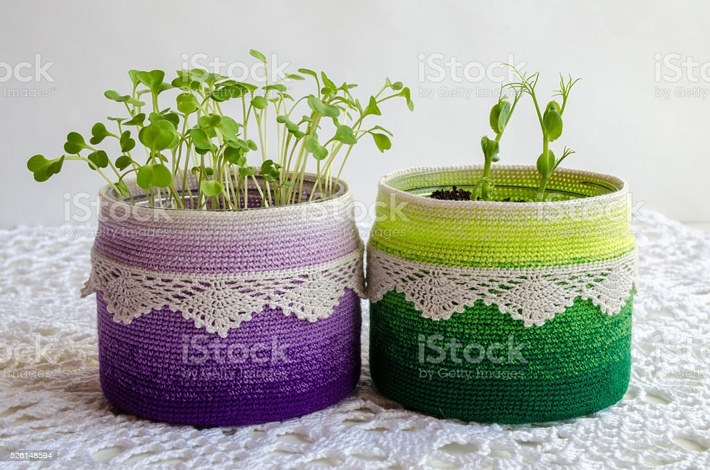 Pea sprouts  in recycling pot with crochet cover stock photo