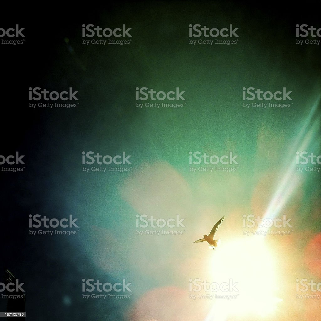 Peace and freedom concept stock photo