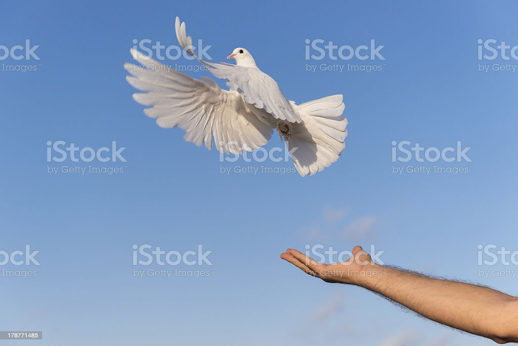 Peace and Freedom Pigeon stock photo