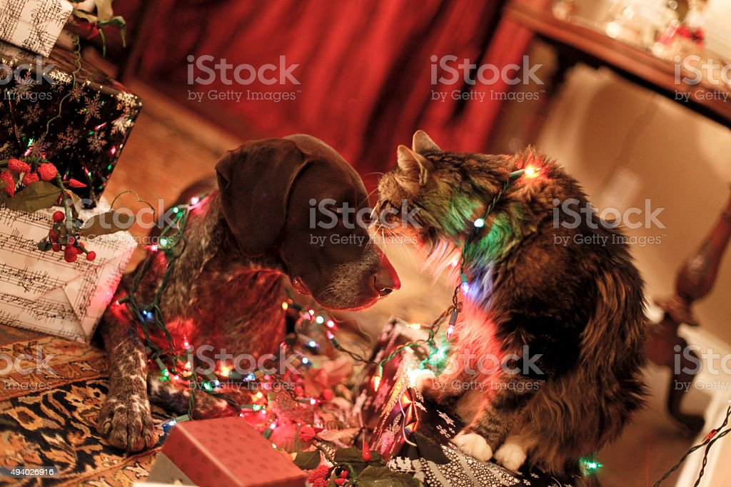 Peace at Christmas stock photo