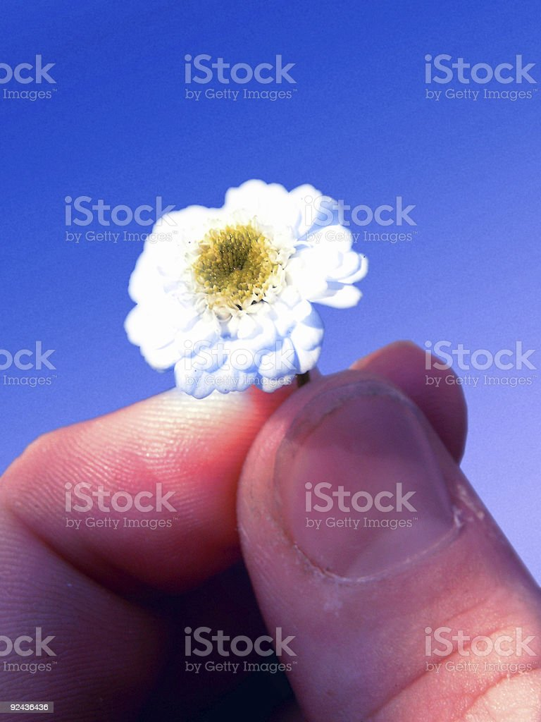 peace flower royalty-free stock photo