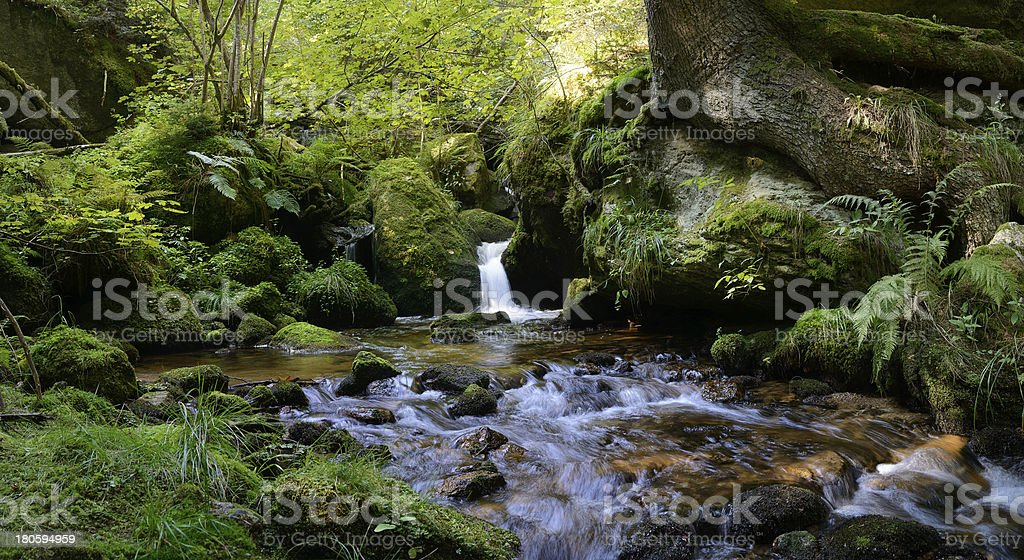 Peace in the Forest royalty-free stock photo