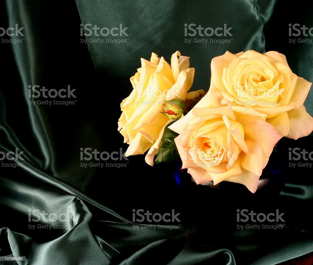 Peace Roses in a Cobalt Vase royalty-free stock photo