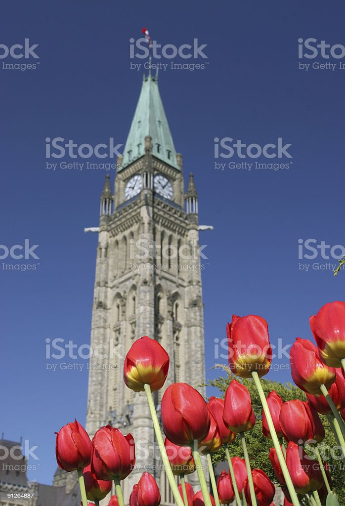 Peace Tower, Parliament of canada, Tulips royalty-free stock photo