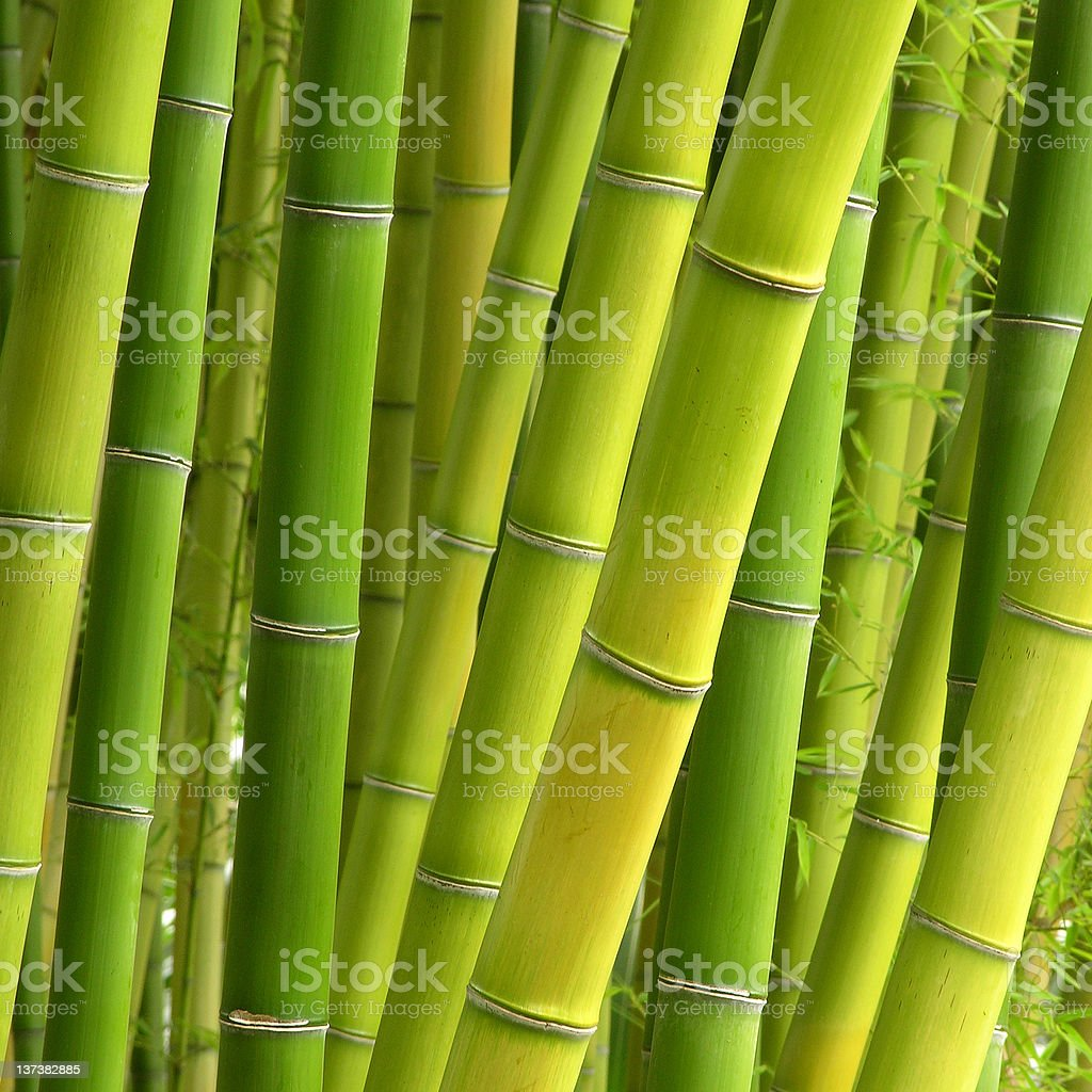 Peaceful Bamboo royalty-free stock photo